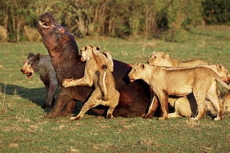 animals fighting wild animals fighting funny collection world
