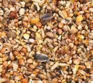 pappagalli inseparabili alimentazione l alimentazione dei pappagalli canarini e altri uccelli