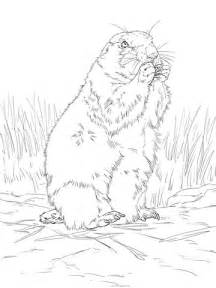 black tailed prairie dog coloring page | free printable