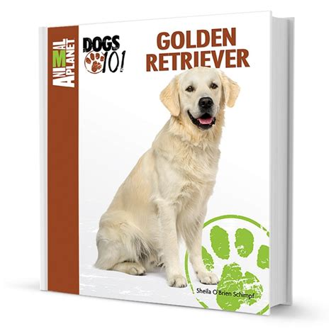 dogs 101 golden retriever animal planet 2017 attractive dogs 101 golden retriever to adopt