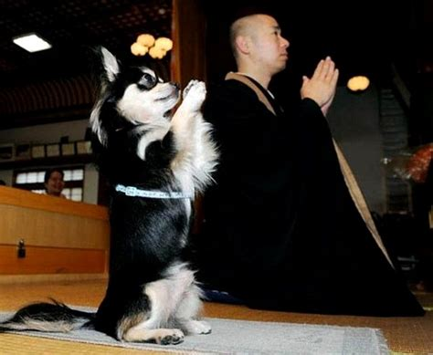 praying puppy top 10 praying dogs picture gallery