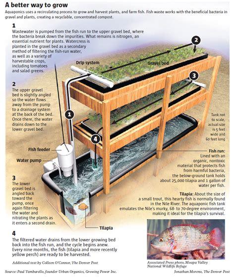 backyard aquaponics system setting up an aquaponics system