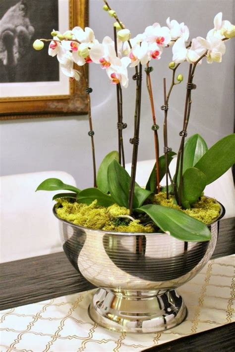decorating with orchids and a great trick for growing