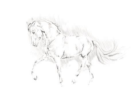 Sho Kuda Untuk Rambut gambar gambar hitam putih hewan kuda jantan rambut cat