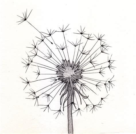 dandelion sketch pinteres