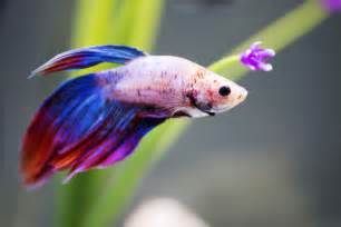 Best Fish as Pets for Beginners   About Pet Life