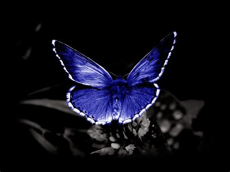 blue wallpaper with butterflies wallpapers butterfly desktop backgrounds