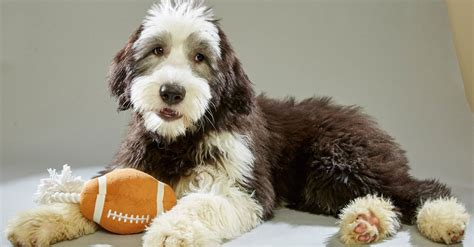 puppy bowl score the 2016 puppy bowl lineup scores a touchdown in cuteness