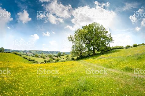 beautiful rolling landscape on a summers day in the