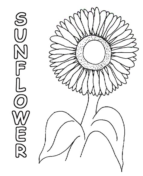 sunflowers coloring pagessunflower coloring page koxdcdmm