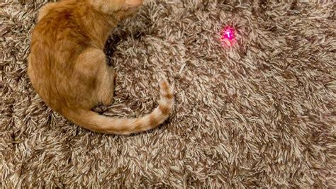 1 petlinks busy cat mat cat play rug rugs ideas