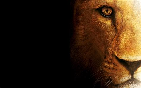 wallpaper hd full to lion hunter full hd wallpaper and hintergrund 1920x1200