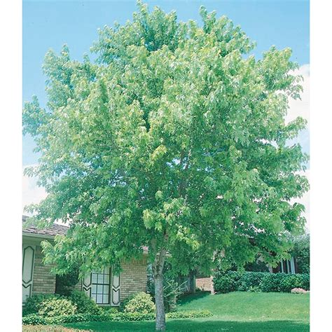 top 28 trim a tree lowes how to trim shrubs and prune