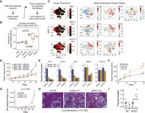 pattern recognition receptors in cancer progression and metastasis exosome rna unshielding couples stromal activation to