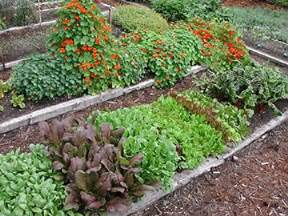 what to plant in june late summer crops july august fall crops garden delights sunny