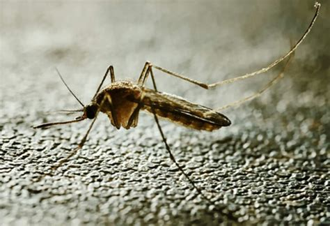 3 in tennessee test positive for west nile virus