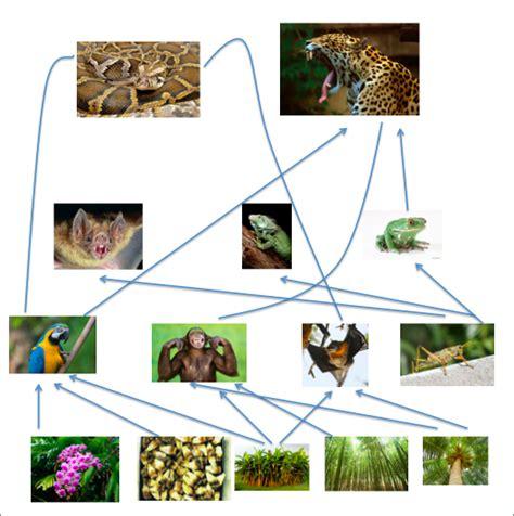 monkey food chain diagram monkey food chain food