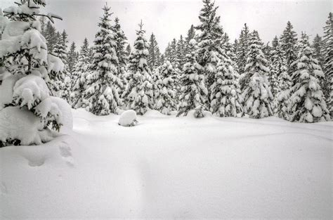 tree in snow wallpaper snow backgrounds pictures wallpaper cave