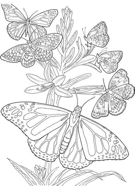 Coloriage Papillons en Printemps Difficile dessin gratuit