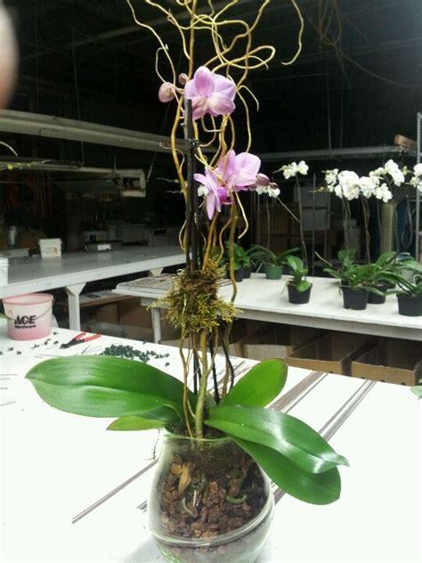 orchid plant centerpiece wedding ideas pinterest