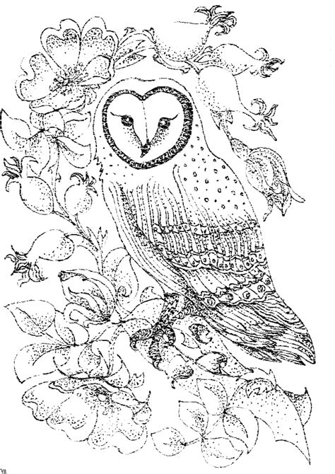 owl coloring pages for adults free printable owl coloring pages for