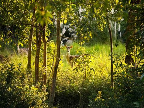 sundarbantours travel to nature with care sundarbantours travel to nature with care
