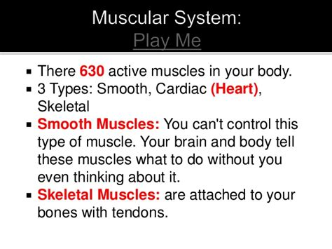 A Tour Of Your Muscular And Skeletal Systems the skeletal muscular system