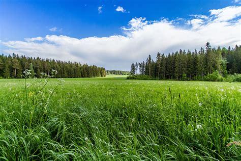 field grass forest trees sky landscape  wallpaper