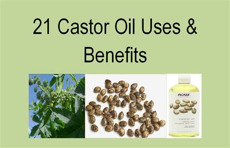 uses and applications for castor oil benefits of castor castor oil medicinal uses the medicinal uses of castor oil