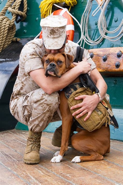 dogs on deployment pet support for those who serve san diego pets magazine