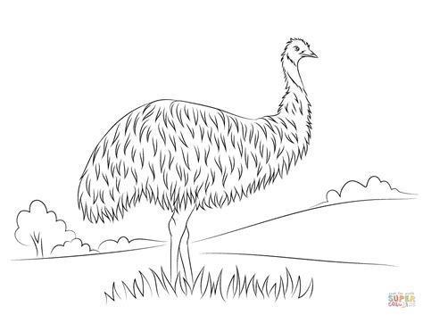 emu coloring page free cute emu coloring page free printable coloring pages