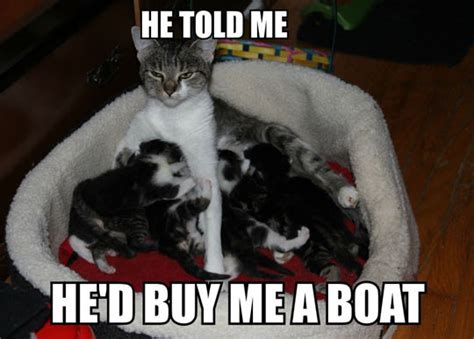 Cat Mom Meme - forever resentful mother cat cats know your meme