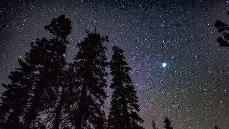 wallpaper  earth night pine tree snow starry sky