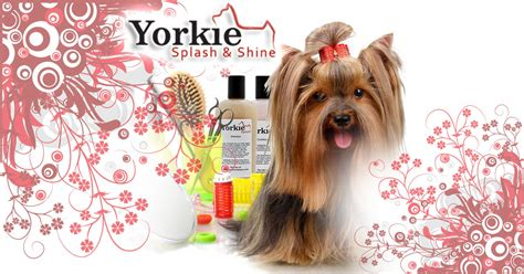 how to groom a yorkie at home grooming your yorkie tips on how to groom your yorkie at home rachael edwards
