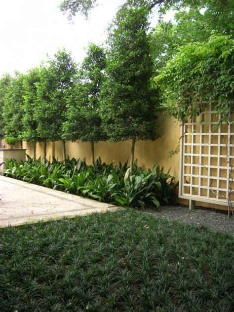 best trees for backyard privacy best plants for backyard privacy kiddys shop com