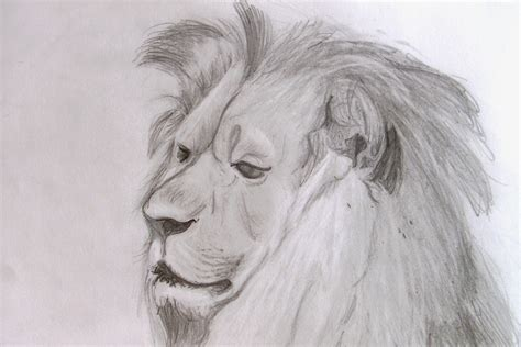 Drawings Of Animals by Richard