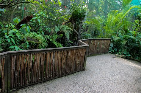 Most Beautiful Botanical Gardens The Most Beautiful Botanical Gardens In Sri Lanka Package Tour