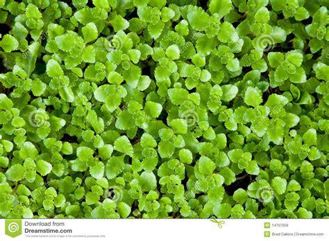 imagenes de flores verdes plantas verdes im 225 genes de archivo libres de regal 237 as