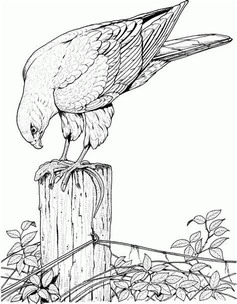 coloring pages birds realistic awesome coloring pages for adults coloring home