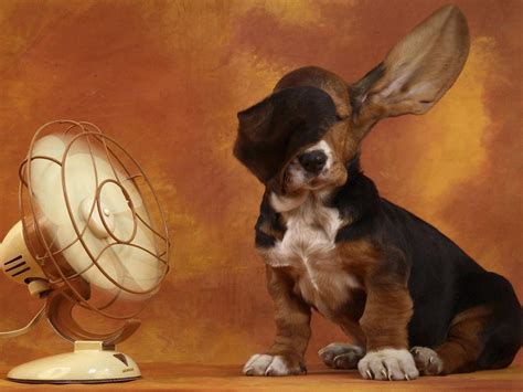funny dog wallpapers wallpaper cave cool dog backgrounds wallpaper cave