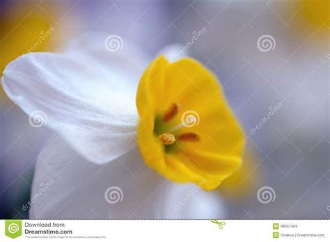 nome fiori bianchi fiori bianchi nomi e immagini gpsreviewspot