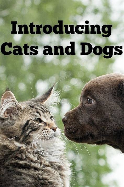 how to introduce dogs and cats in the same house how to introduce dogs and cats in the same house 28 images how to introduce a and