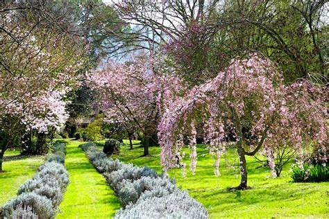 il giardino di ninfa giardino di ninfa viale i viaggi di fraintesa