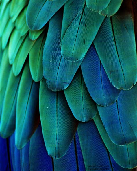Blue And Green L by Macaw Feathers Green Blue By Michael Fitzsimmons On