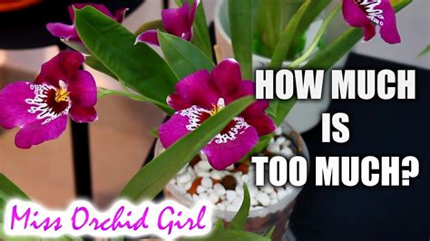 about buying orchids budgets ebay auctions forming a