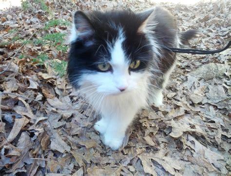 Universal Kitten universal radio customer cat junior