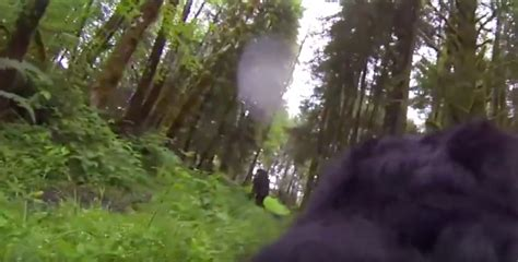 Bigfoot Search Did This With Gopro Strapped On Its Back Find Bigfoot