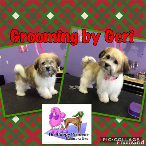shih tzu intelligence level 17 best images about quot before quot quot after quot grooming photos on japanese
