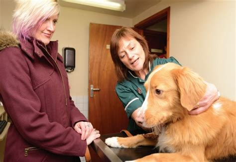 puppy vet visits your how to prepare your for his vet visit health and care care