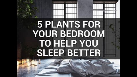 what helps sleep better 5 plants for your bedroom to help you sleep better
